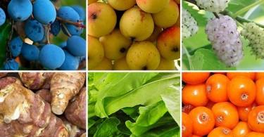 Elfelejtett magyar gyümölcsök és zöldsége. Ősi superfoodjaink