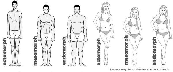 3 különböző testtípus létezik – te tudod, melyikbe tartozol? Mezomorf testtípus és fogyás