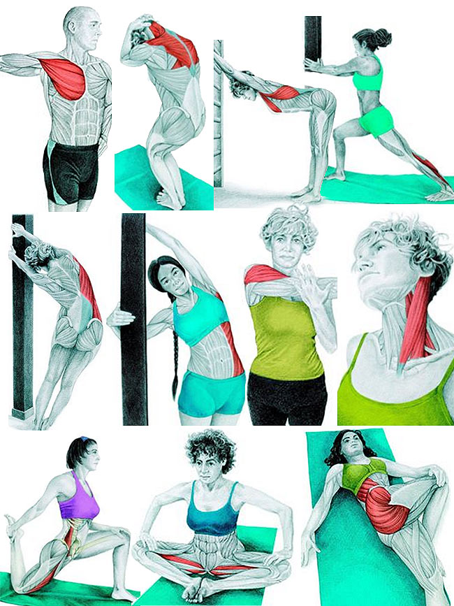 Testépító edzés mellé ajánlott nyújtás gyakorlatok az egyes izomcsoportokra